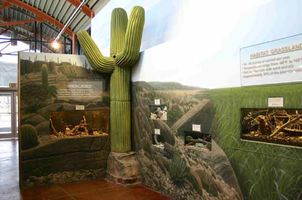 Foam Cactus Museum Display